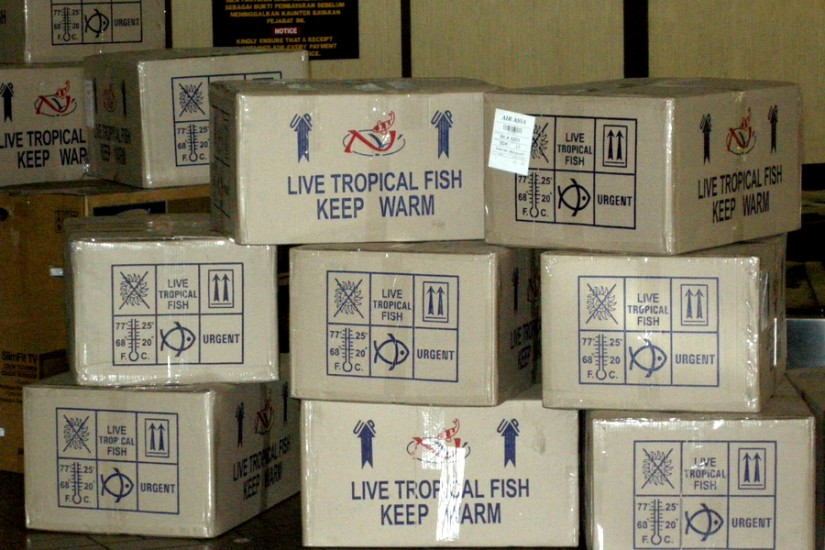 7 Live Tropical Fish Boxes