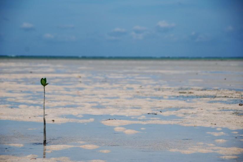 Philippines Coco Loco Island mangrove