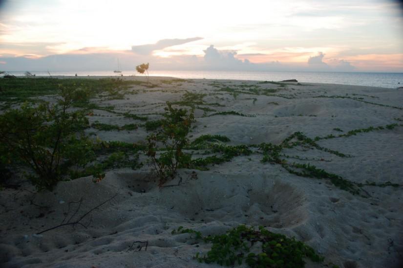 Pulau Selingan Borneo 3