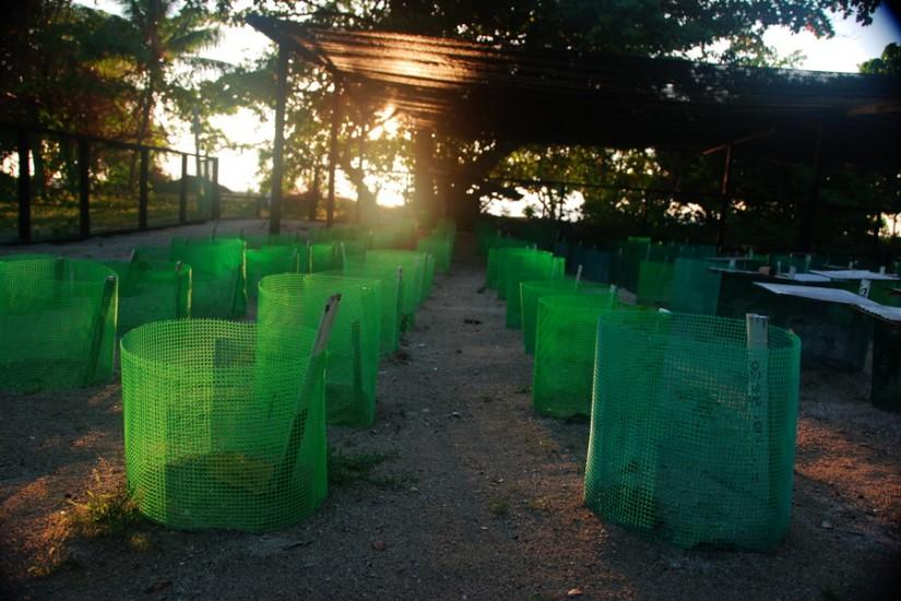 Pulau Selingan Borneo Hatchery