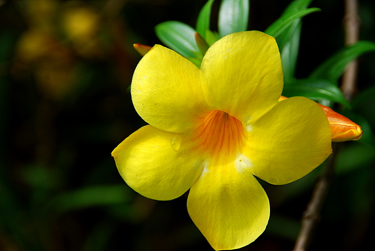 billit lodge floare galbena