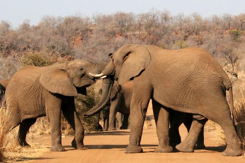 Elephants_Zimbawe