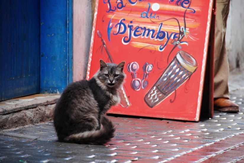 Morocco Essaouira cat 1