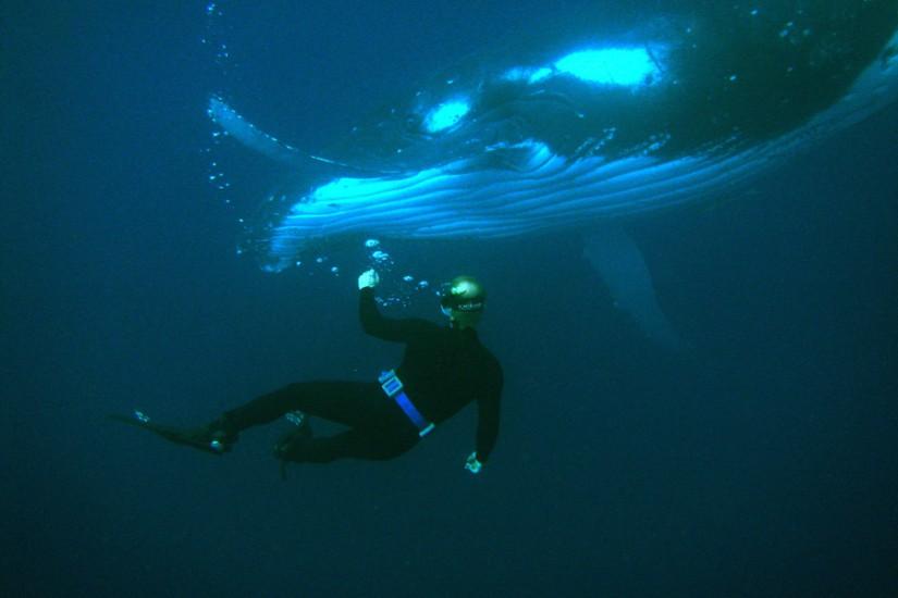 Tonga Humpback whale Warmus 2005