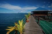 Singamata-BorneoDSC_0078