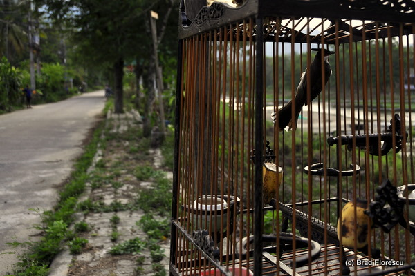 Nakhon Si Baan Kiri Wong Village 2