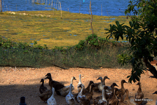 Ko Yor Island Songkla 4
