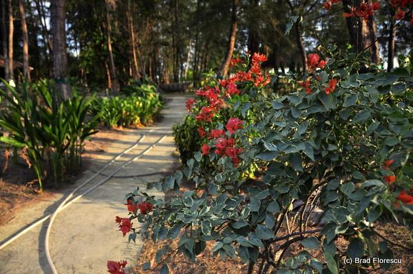 Satun Lalita Resort 10