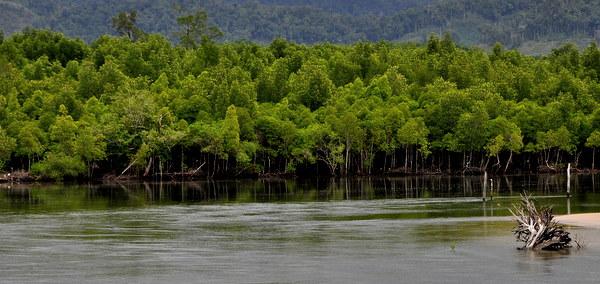 Trang Pakmeng river 1