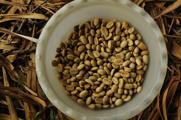 Sumatra arabica coffee beans