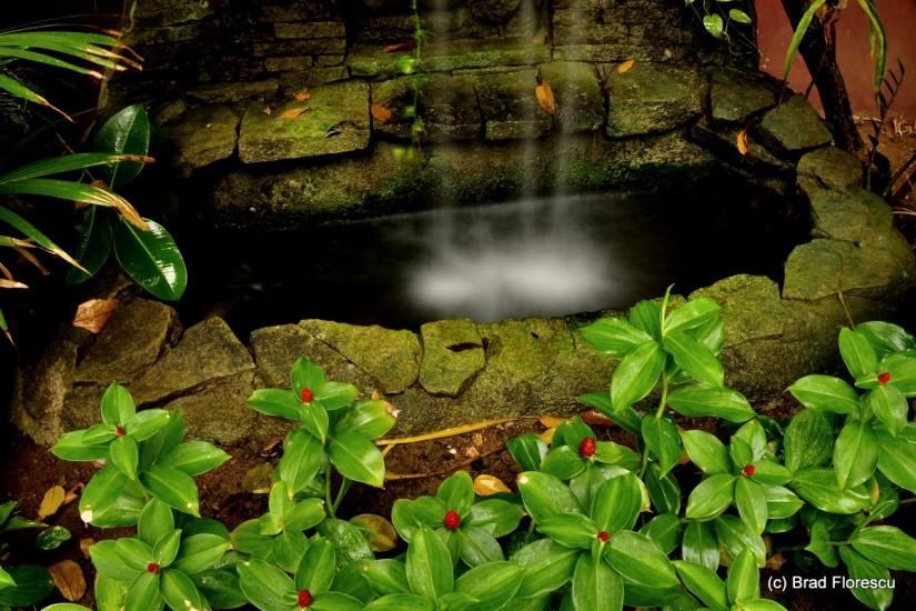 Eranda Herbal Spa garden waterfall 2
