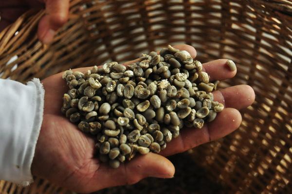Blue Batak coffee beans