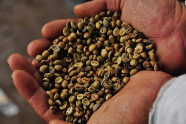 Coffee beans at Lintong Nihuta