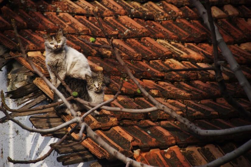 Antakia old cats 1