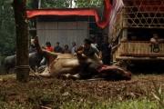 Tana Toraja Funaral Sulawesi Indonesia 7