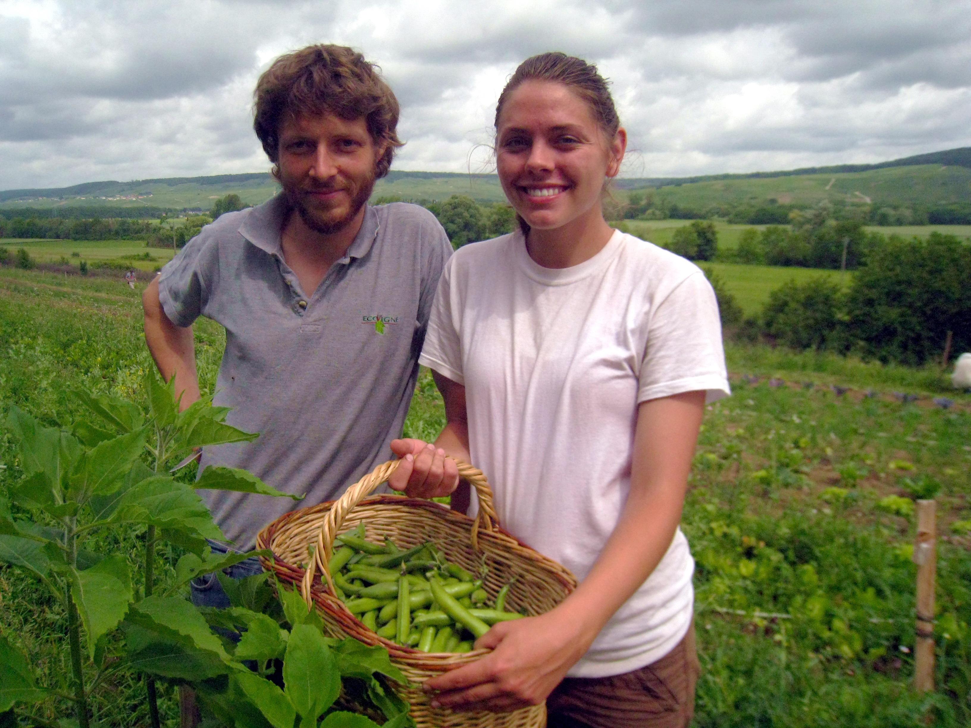 WWOOF_voluntariat_agricultura organica_P1