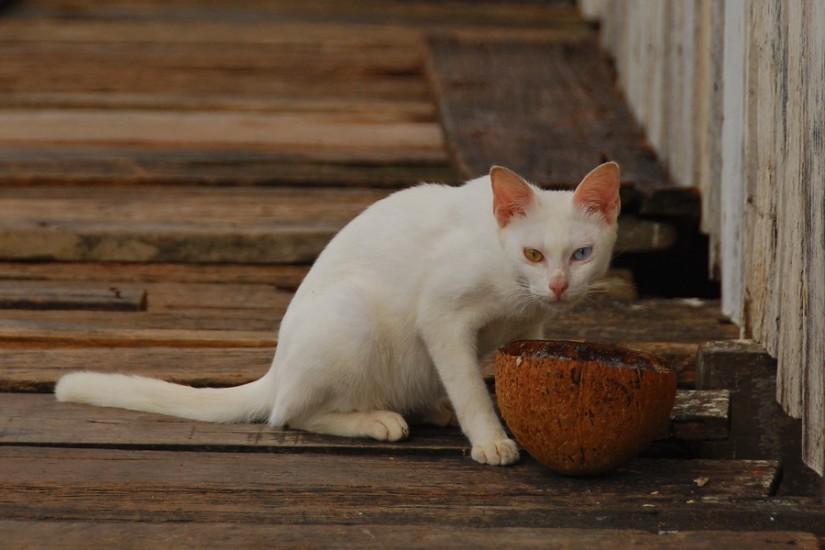 Borneo Semporna Water VillageDSC_0210