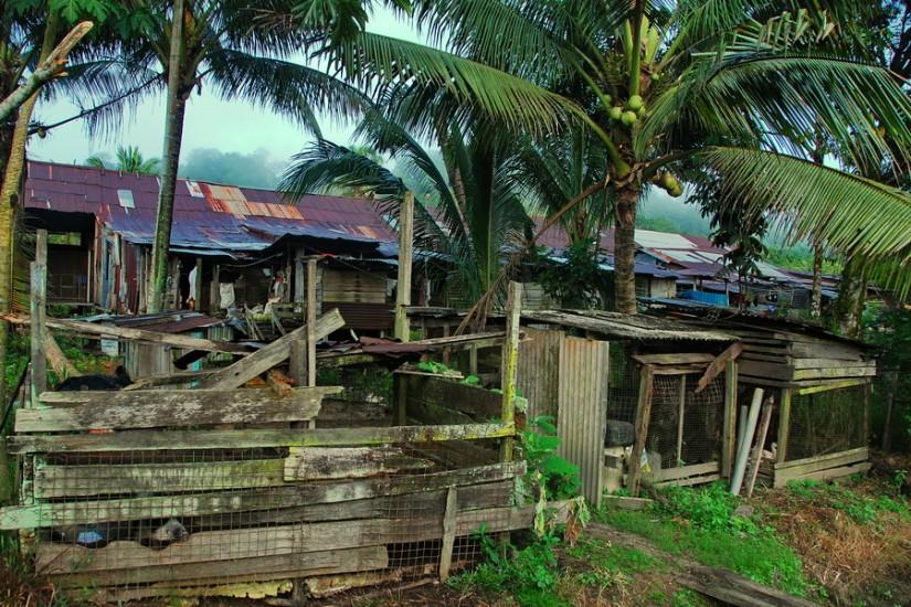 Borneo SempornaDSC_0039