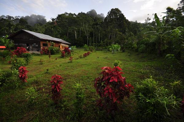 Gunung Leuser Cinta Alam