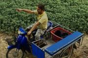 Thailanda Bradut Florescu Unirea Thailander
