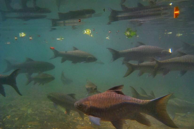 Thailand Mae Hong Son Tham Pla Fish Cave 12