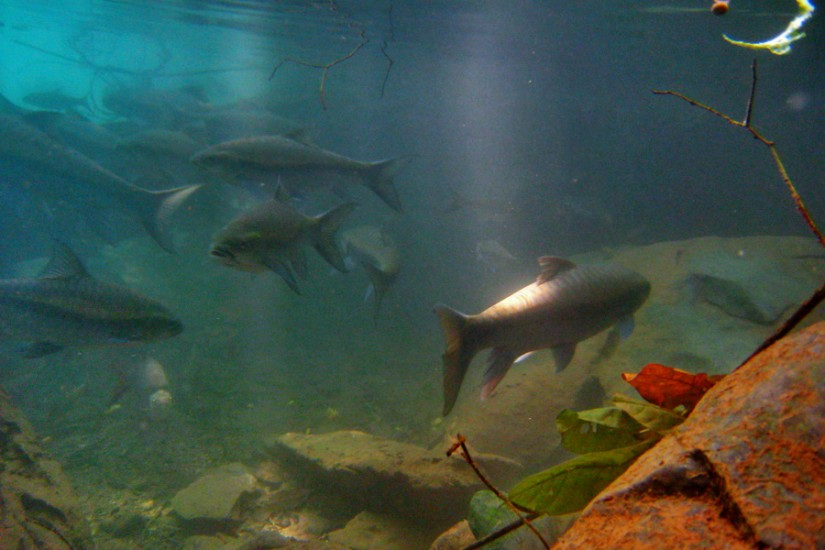 Thailand Mae Hong Son Tham Pla Fish Cave 18