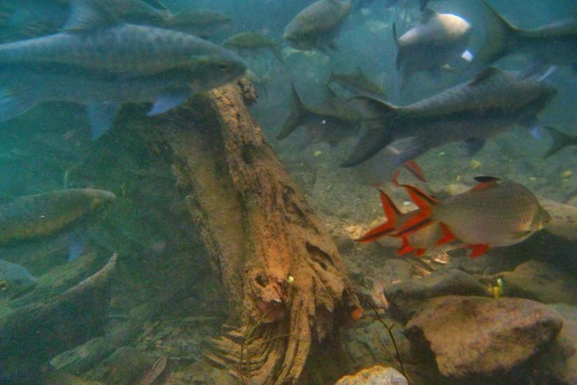 Thailand Mae Hong Son Tham Pla Fish Cave 20