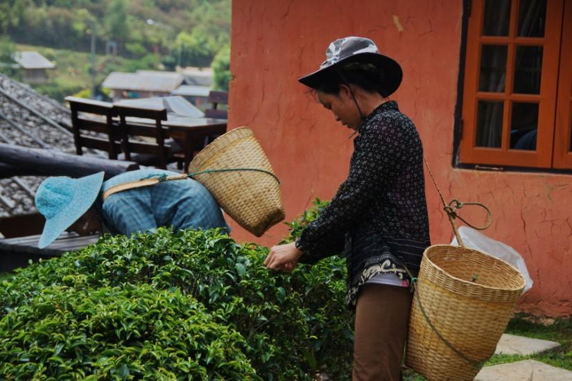 Thailand Mae Hong Son2011-04-16 11-02-09 - _DSC8822_2