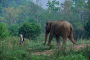 Thailand Mae Hong Son Huay Pu Keng Long Neck Village Elephant
