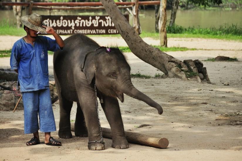 Lampang Elephant Conservation Center 15