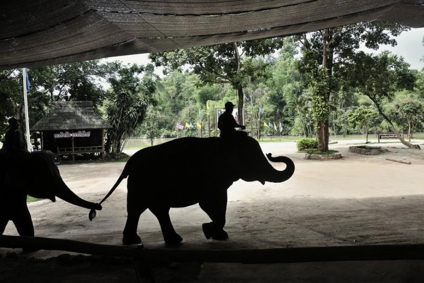 Lampang Elephant Conservation Center 18