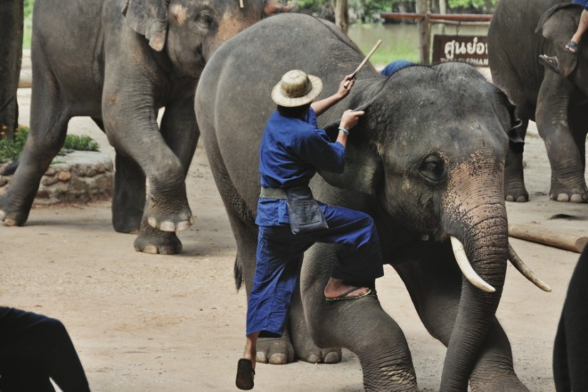 Lampang Elephant Conservation Center 23