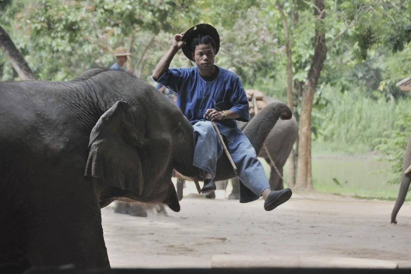 Lampang Elephant Conservation Center 31