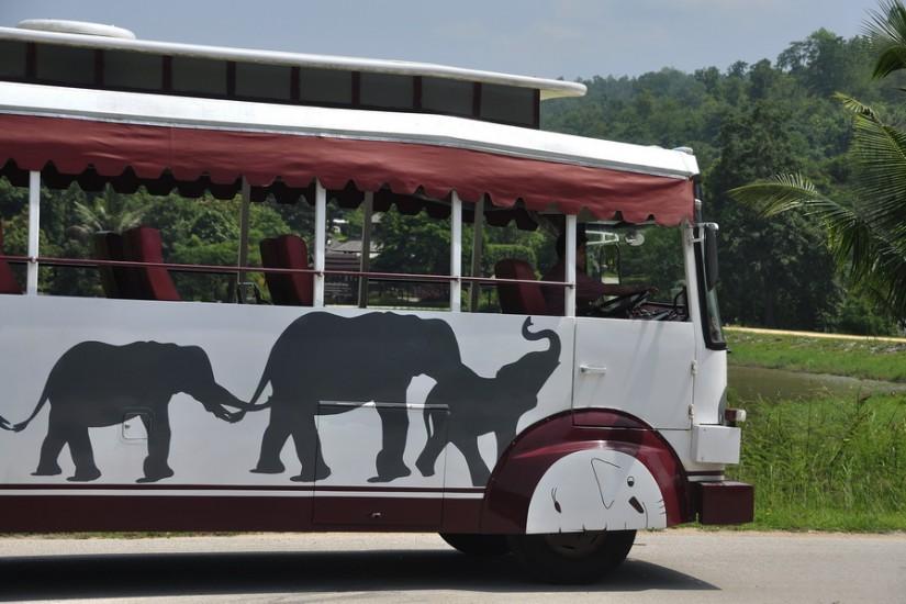 Lampang Elephant Conservation Center 39