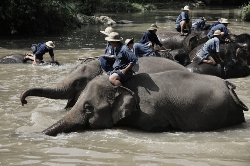 Lampang Elephant Conservation Center 6