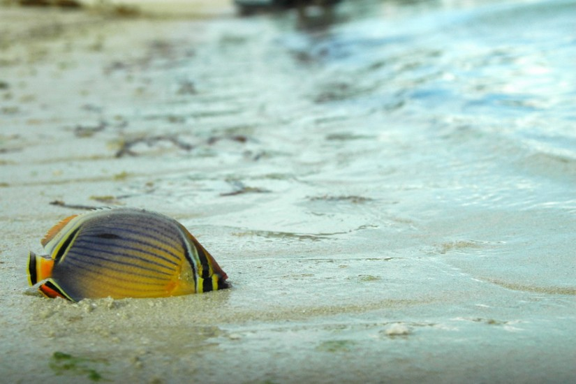 India Laccadives LakshadweepDSC_8203_2