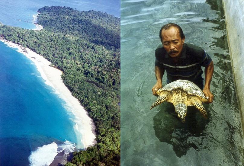 Bangkaru Island and Turtle