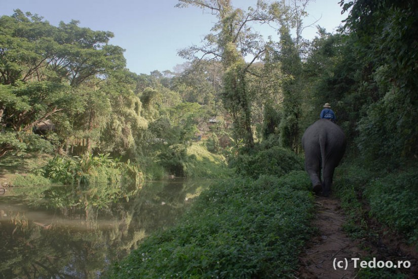 Lampang Thai Elephant Conservation Center