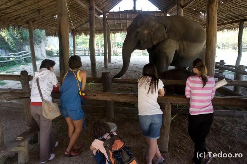 Lampang Thai Elephant Conservation Center