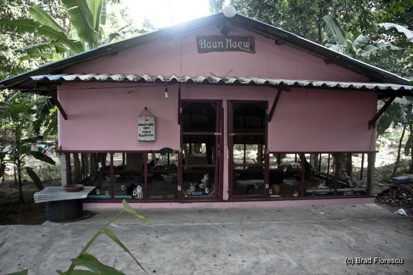 Casa Pisicilor.