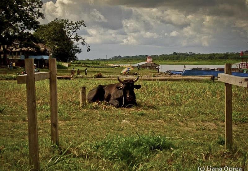 Brazilia Amazon Santa Rosa-3669-2