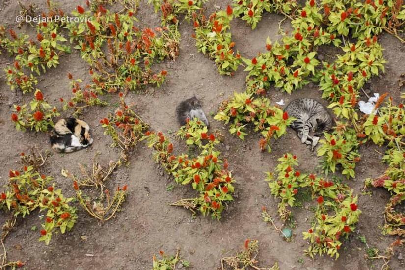 Parcul pisicilor într-un oraș al câinilor.