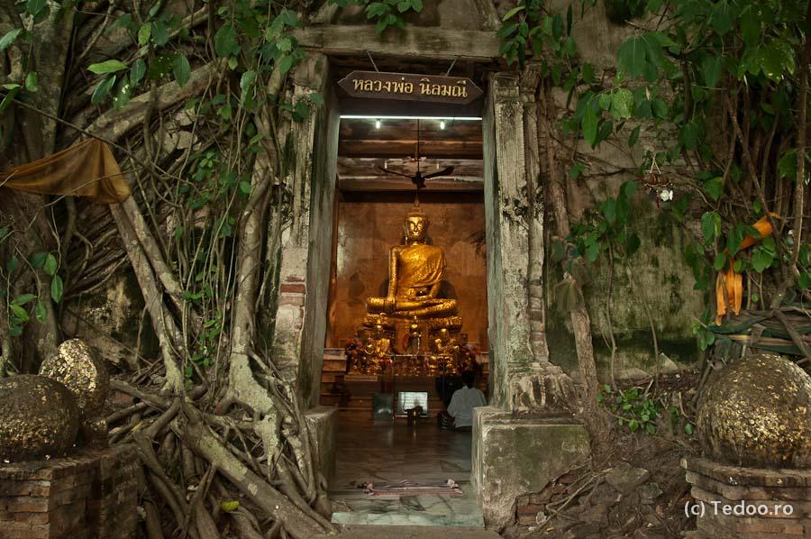 Templu copaci Bangkok