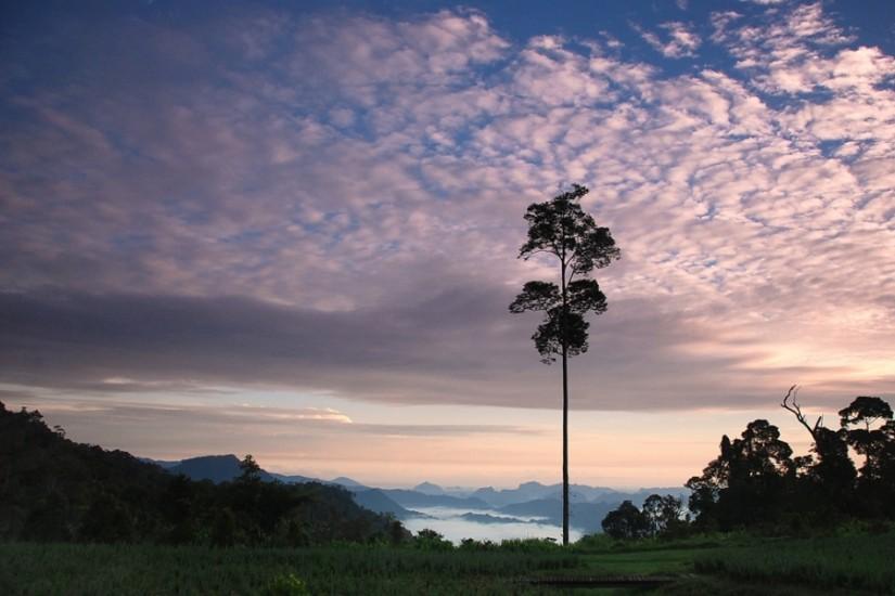 Borneo Hightlands Resort. Garden
