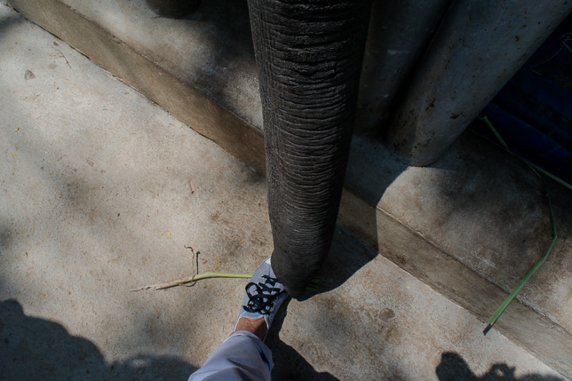 Friends of the Asian Elephant Hospital