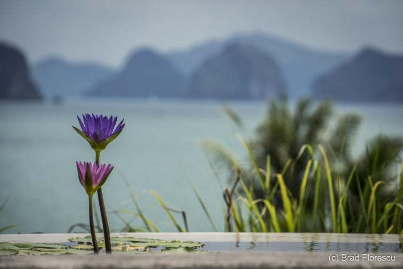 Six Senses Yao Noi. Bar-Lounge-ul The Den, scufundat in lotusi.