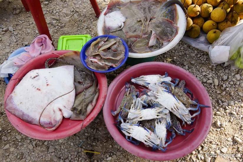 Crabi, creveți, sepie, rechin, scoici și toate soiurile de pește.