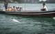 Thailanda Khanom delfini roz 9