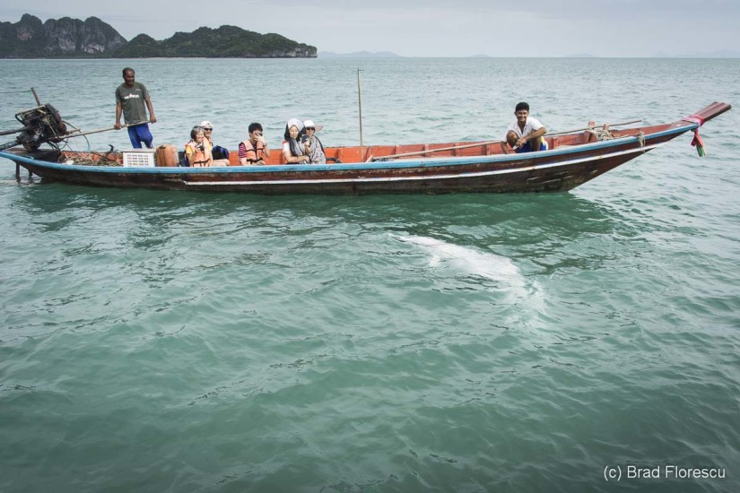 Thailanda Khanom delfini roz 8
