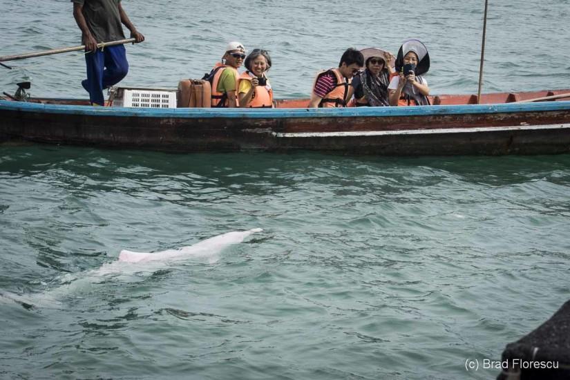 Thailanda Khanom delfini roz 5